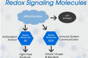 Redox Signaling – the best kept health secret you should know!